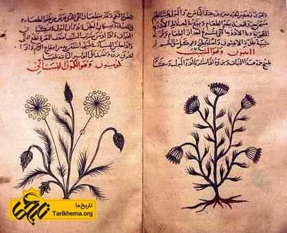 عکس کتاب راهنمای گیاهان دارویی به زبان عربی مربوط به دوران طلایی اسلام Tarikhema.org
