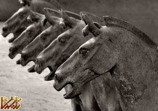 مجسمه های شگفت انگیز ارتش سفالین : تِرا کودا