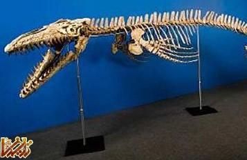 آیا اجداد ما دایناسور ها را دیده اند؟