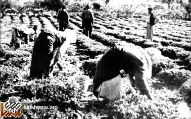 تصاویری از مشاغل قدیمی ایران ( 1 )