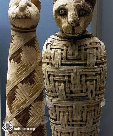 عکس مومیایی یک گربه در مصر باستان!