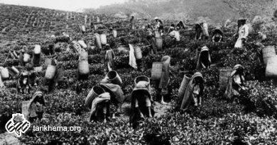 تاریخ چای در ایران