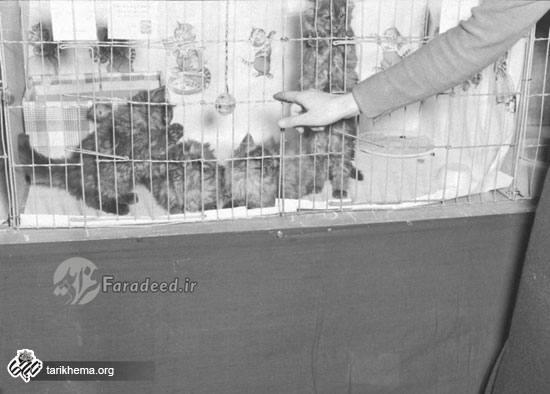 نمایشگاه گربهایرانی در شیکاگو سال ۱۳۱۶