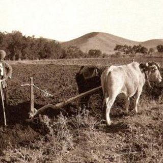 کشاورزی در ایران