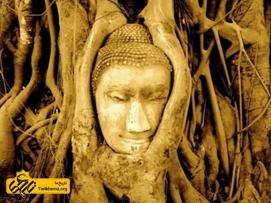 درخت عاقل بودا
