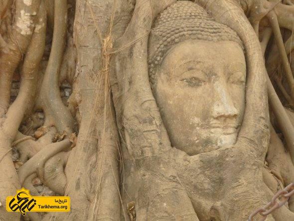 درخت عاقل بودا در تایلند