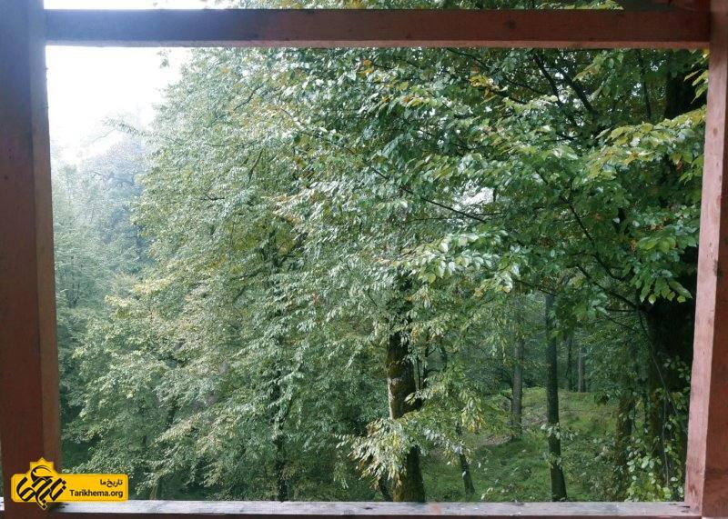 مناظر زیبای جنگل دالخانی
