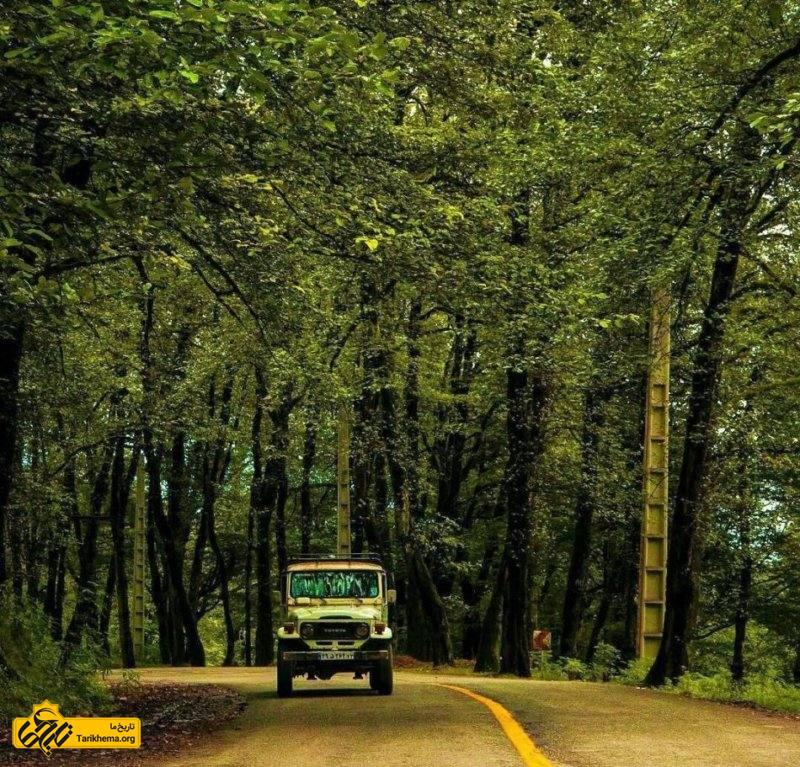 مسیر زیبای جنگل دالخانی