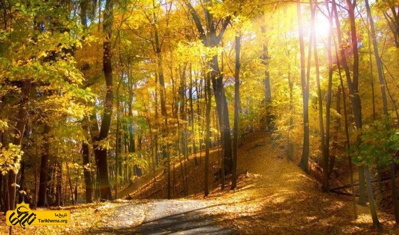 این جنگل ۱۱۴اُمین اثر طبیعی است که توسط سازمان میراث فرهنگی در ۲۰ بهمن ۱۳۸۹ در فهرست میراث طبیعی ایران قرار گرفت. در جلسه شورای عالی محیط زیست در ۲۹ بهمن سال ۱۳۹۳ جنگل ابر منطقه حفاظت شده اعلام شد و در فهرست مناطق چهارگانه سازمان حفاظت از محیط زیست درآمد