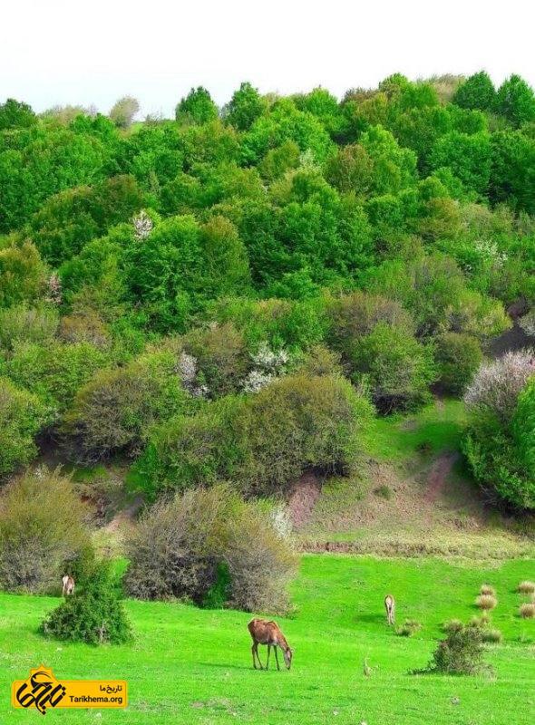 معرفی جنگل فندقلو اردبیل