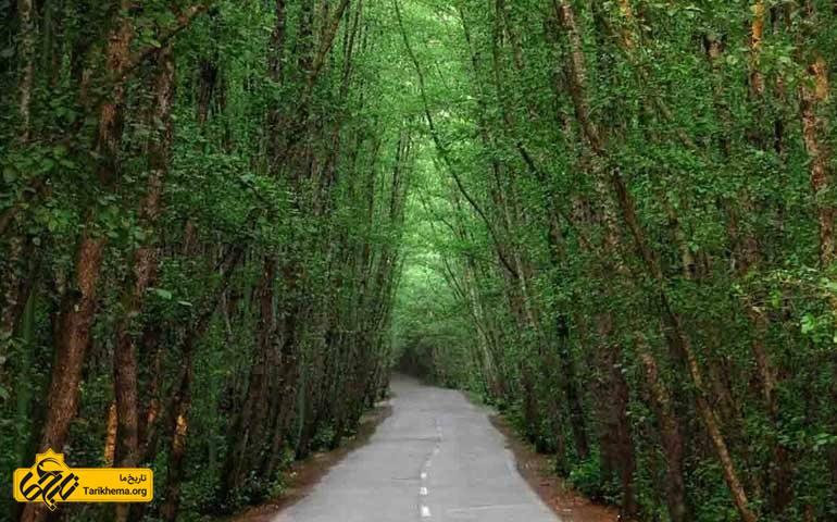 طبیعت اطراف رامسر