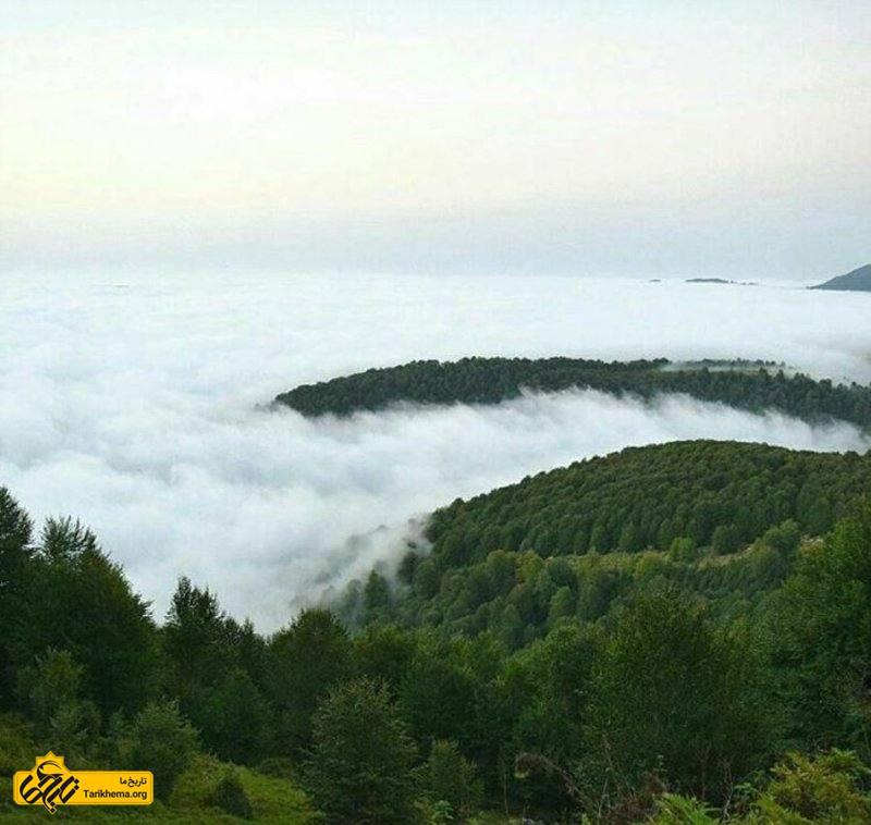 جنگل لاریخانی