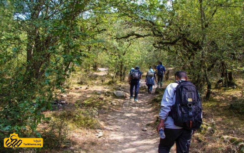 جنگل الیمستان در ۳۰ کیلومتری شهر آمل در حاده هراز واقع شده است.