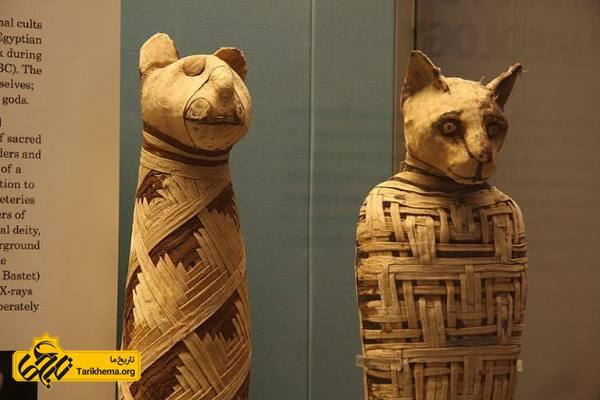 عکس ۱۰ حقیقت شگفت انگیز درباره مومیایی های مصر باستان %d9%85%d9%88%d9%85%db%8c%d8%a7%db%8c%db%8c-%d9%87%d8%a7%db%8c-%d8%ad%db%8c%d9%88%d8%a7%d9%86%d8%a7%d8%aa Tarikhema.org