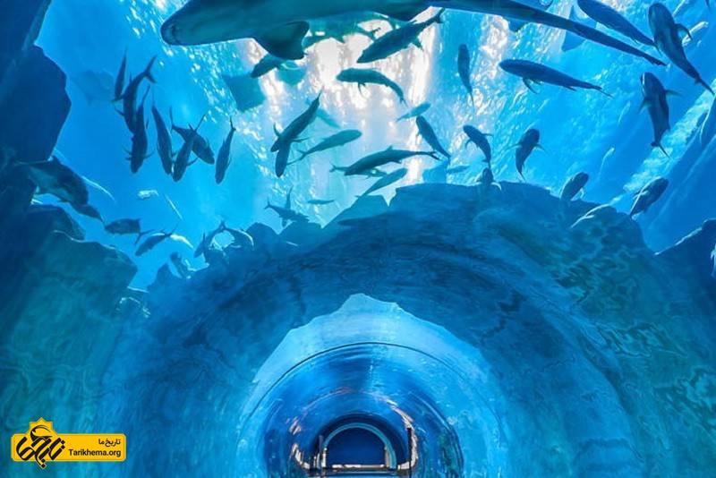 عکس  در این تونل آکواریوم از ۵ اقیانوس دنیا گونههای مختلف آبزیان، ماهیان آبهای شور و شیرین، ستاره دریایی و... به نمایش گذاشته میشوند. %da%a9%d9%84%da%a9%d8%b3%db%8c%d9%88%d9%86-%d8%a2%d8%a8%d8%b2%db%8c%d8%a7%d9%86-%d8%af%d8%b1-%d8%a7%d8%b5%d9%81%d9%87%d8%a7%d9%86 Tarikhema.org
