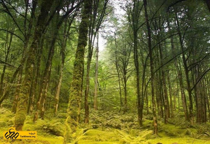 جنگل متل قو ( سلمانشهر)