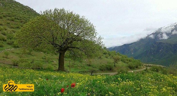این روستا روبروی کوههای سر به فلک کشیده شاهو و در حاشیه رود خانه خروشان سیروان جای گرفتهاست.