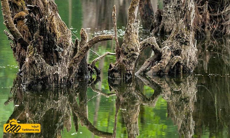 عکس دریاچه ارواح %d8%af%d8%b1%db%8c%d8%a7%da%86%d9%87-%d8%a7%d8%b1%d9%88%d8%a7%d8%ad-%d8%8c-%d9%85%d9%85%d8%b1%d8%b2-%d9%86%d9%88%d8%b4%d9%87%d8%b1 Tarikhema.org
