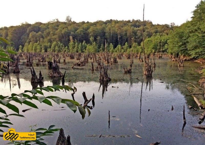 ممرز نامی یک نوع درخت بومی منطقه است با ارتفاع ۱۵ تا ۲۵ متر، تنه ای شیاردار و پوست صاف و مایل به رنگ سبز خاکستری که سالیان سال در دل دریاچه ریشه داشتند و به دلیل مجاورت دائم با آب اکنون پوسیدهاند