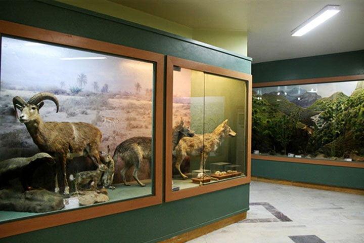 موزه تنوع زیستی آبادان