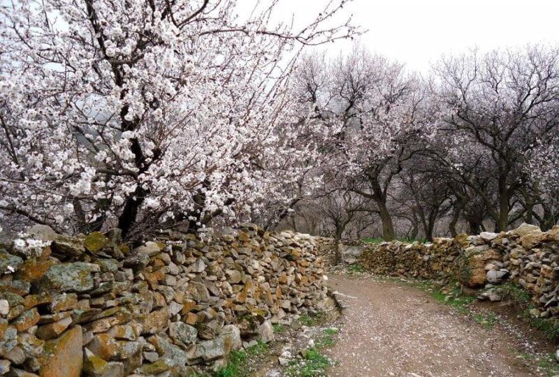 روستای زنوزق در بهار