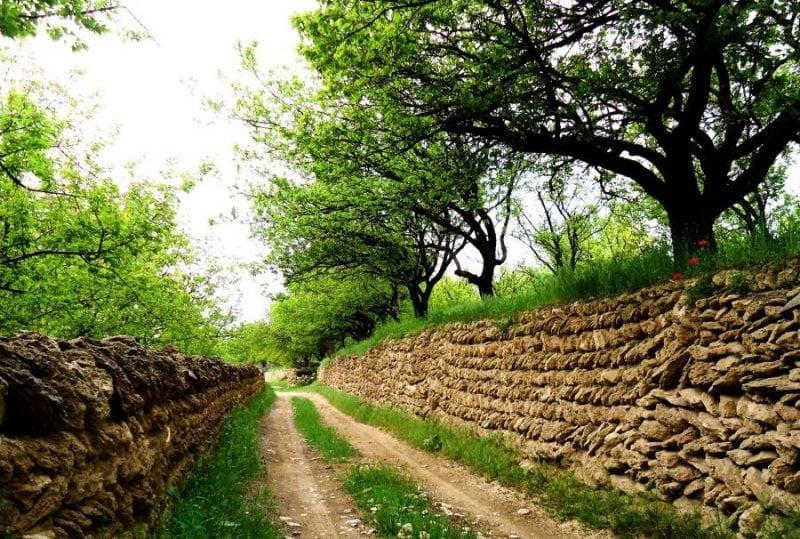 روستای زنوزق در تابستان