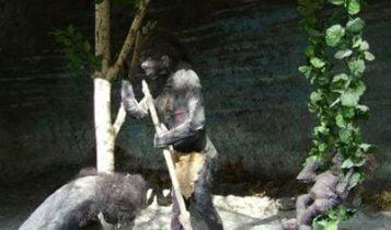 موزه عجایب هفت گانه کرج