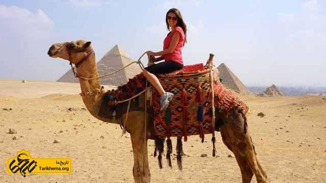 شتر در مصر