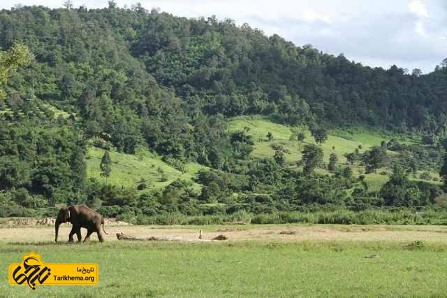 فیل در تایلند مدرن