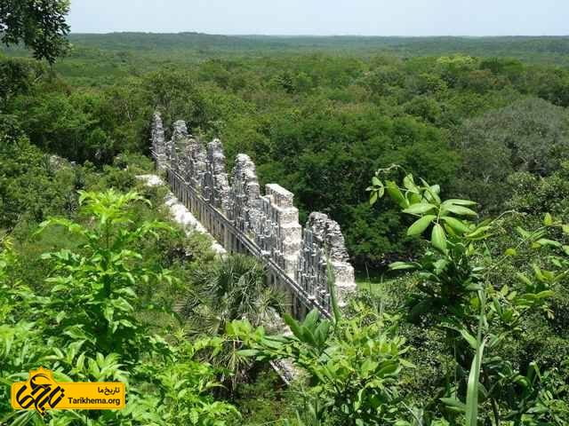جنگل های مکزیک