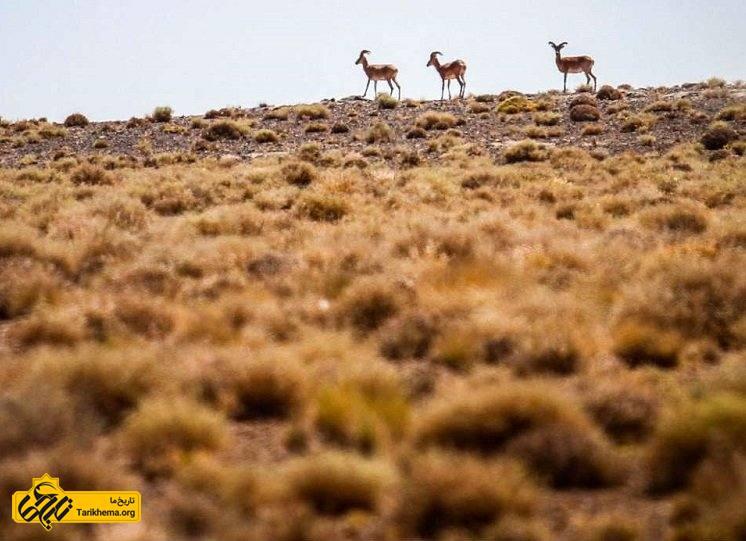 پارک ملی و پناهگاه حیات وحش قمیشلو