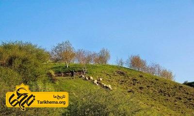 پناهگاه حیات وحش شیر احمد