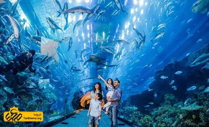 راهنمای سفر به دنیای زیر آب دبی