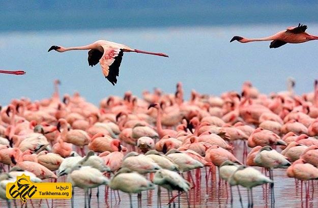 ماجرا جویی های هیجان انگیز در کنیا