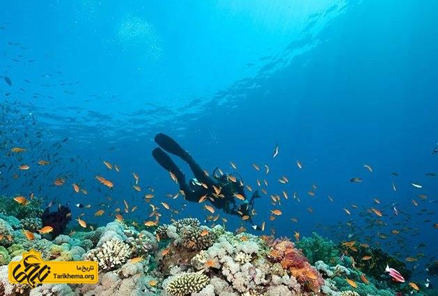 غواصی در فیلیپین