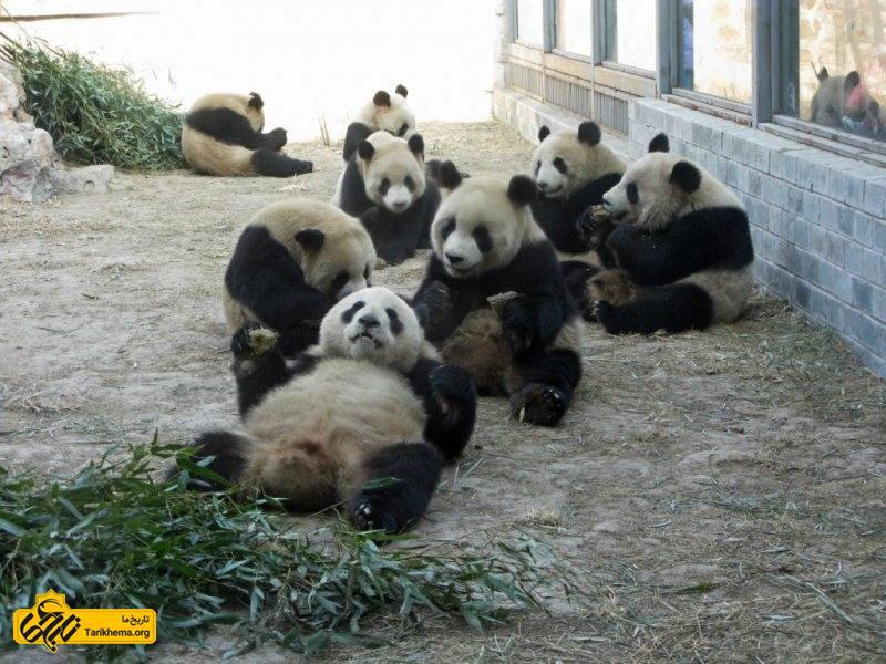 بزرگ ترین باغ وحش های دنیا