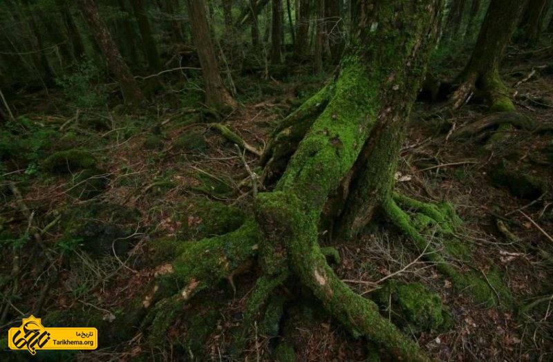 جنگل های مرموز جهان