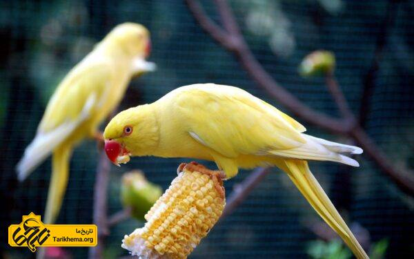 باغ پرندگان کوالا لامپور