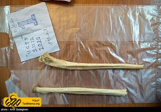 کشف اسکلت انسانی و حیوانی در تخت جمشید