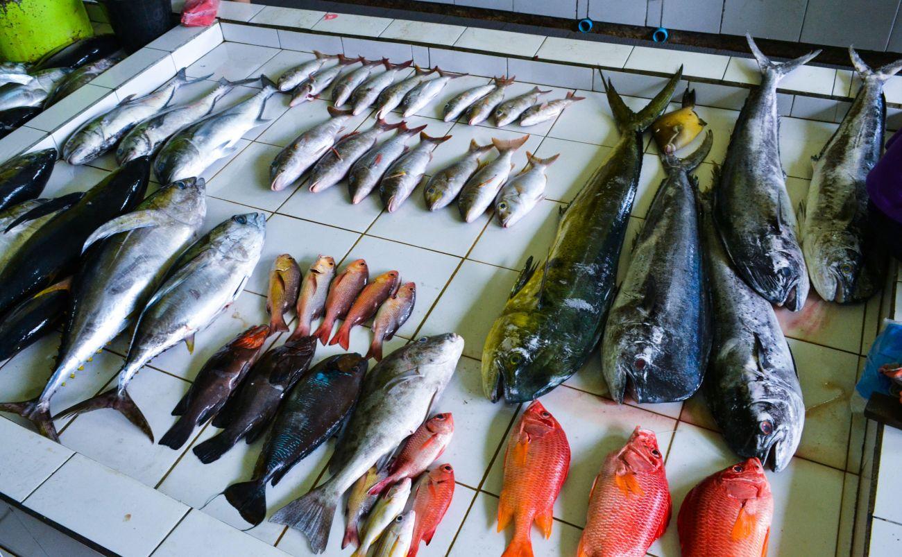 بازار ماهی ماله