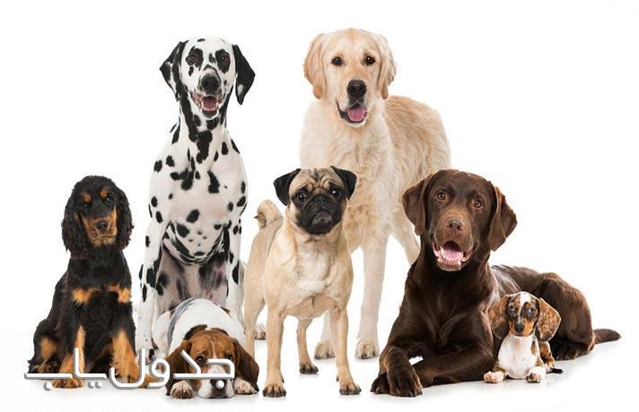 لیستی از سگ های باهوش در دنیا
