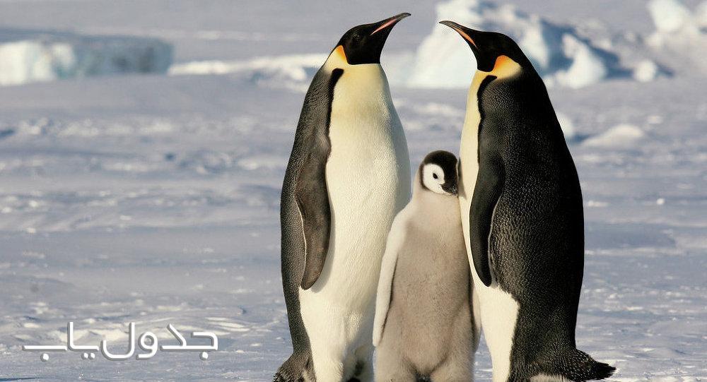 پنگوئن های امپراطور