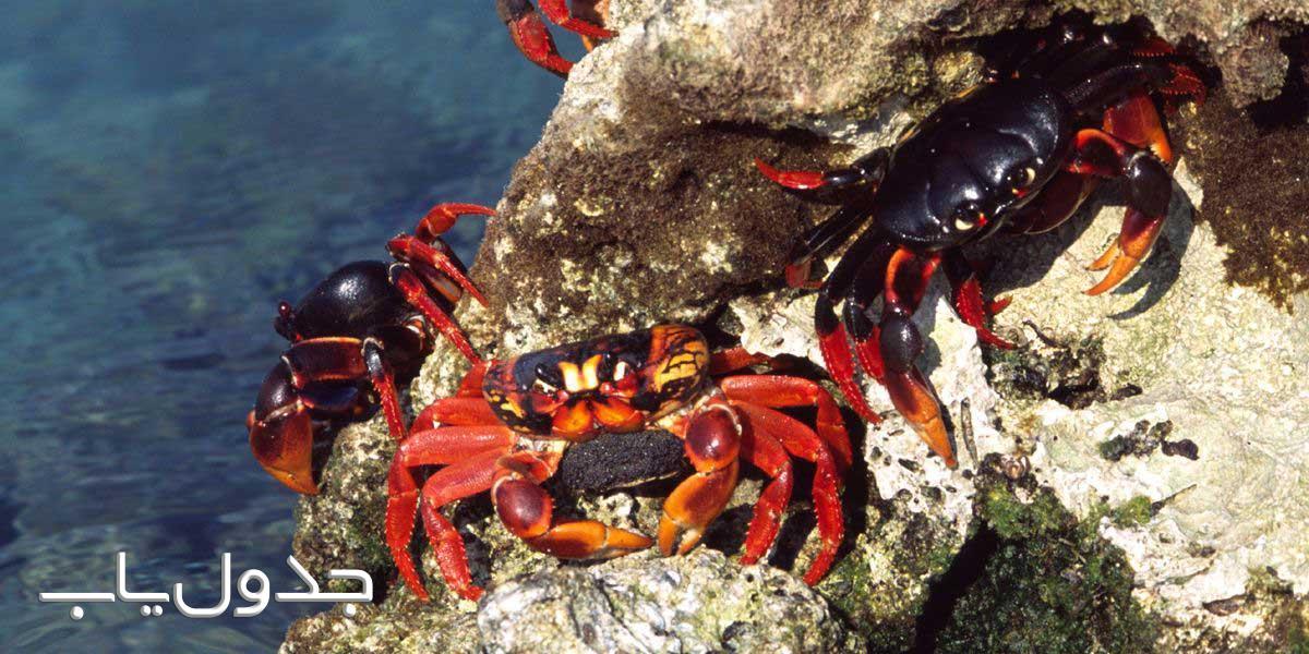 خرچنگ جانور سخت پوست
