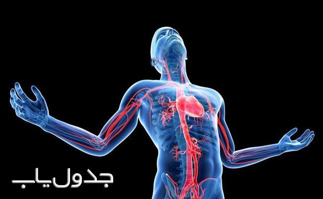 درباره بدن خود چه می دانید؟