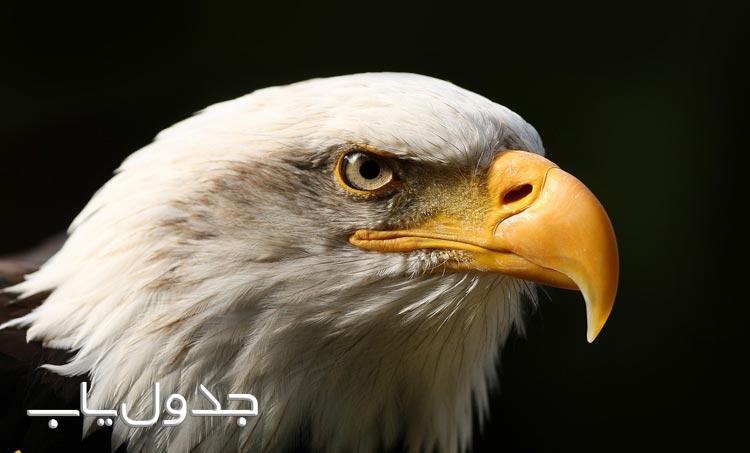 عقاب ها پرندگانی خشن، تیز و البته وفادار