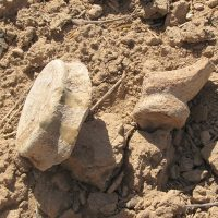انجام دور جدید کاوش های باستانی در محوطه سه تپه نیشابور