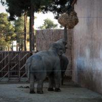 مهلت یک هفته ای محیط زیست به باغ وحش مشهد برای انجام اصلاحات