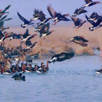 ۸ سایت پرنده شناسی در استان زنجان وجود دارد
