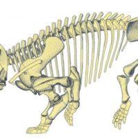 کشف بقایای ۲۰۰ میلیون ساله حیوانی به اندازه یک فیل
