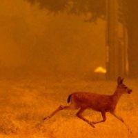 روند گرمایش فعلی اکثر جانداران کره زمین را نابود می کند